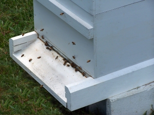 Natural Bee Hive and Beeswax